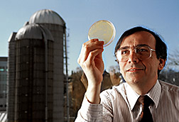Agricultural engineer Richard Muck inspects a petri dish containing a strain of Lactobacillus buchneri. Click here for full photo caption.
