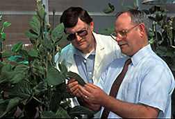Researchers examine a soybean plant used in research to improve the methionine content of soy protein. Click here for full photo caption.