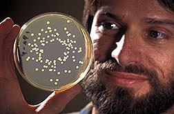 Microbiologist Pierre Dery checks populations of Enterobacter cloacae.
