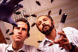 Testing cockroach bait