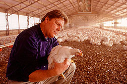 Poultry Manure can be used as a biomass source