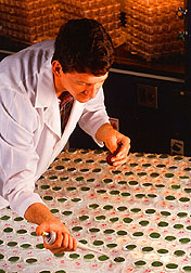 Entomologist Robert Behle applies spray-dried biopesticide.