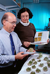 Microbiologists compare alfalfa sprouts grown from seeds that have been irradiated. Click here for full photo caption.