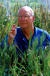 Geneticist examines a newly developed, high-yielding, scab-tolerant spring wheat variety. Click here for full photo caption.