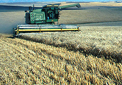 Photo: Combine harvesting barley. Link to photo information