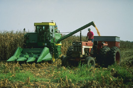 Photo: Corn being harvested. Link to photo information