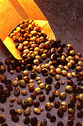 Display of many different kinds of soybean seeds poured from an envelope. Link to photo information