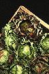 Mini lettuce