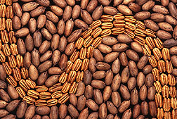 Photo: Pecans. Link to photo information