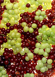 Photo: To ensure that delicious U.S.-grown grapes are available year after year, ARS scientists are learning more about how to protect grapevines from Pierce's disease. Link to photo information
