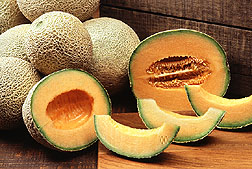 Photo: Cantaloupes. Link to photo information