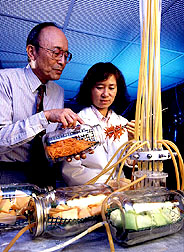 ARS food technologist Alley Watada (left) prepare shredded carrots for automated measurement of ethylene production.