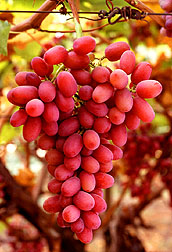 Crimson Seedless grapes.