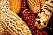 Maize from Latin America