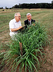 Scientists examine Eastern gamagrass.