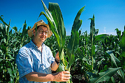 ARS geneticist Victor Raboy examines new corn low in phytic acid