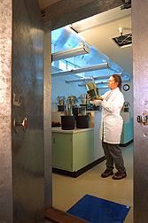 Technician examines beneficial insects within the containment portion of an ARS quarantine facility. Link to photo information.