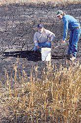 Rangeland scientist and range science technician collect soil after a fire: Click here for full photo caption.