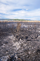 The Henninger Ranch after a prescribed fire: Click here for full photo caption.