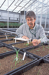 Agronomist collects data on weed emergence in soil from nine pastures: Click here for full photo caption.