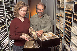 Collections manager and mycologist examine a fusiform rust of pine: Click here for full photo caption.