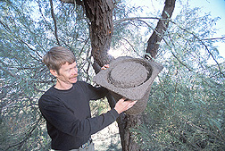 Entomologist examines a honey bee trap: Click here for full photo caption.