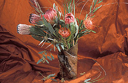 An arrangement of protea flowers: Click here for full photo caption.