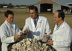 Patrick Hunt, Matias Vanotti and Ariel Szogi examine sample of calcium phosphate. Link to photo information
