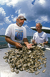 John Ewart and Gary Richards examine freshly harvested oysters on board the Center for the Inland Bays' work boat. Link to photo information