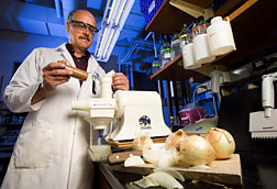 Geneticist juices onions to prepare for an analysis of flavor and health-enhancing fructans: Click here for full photo caption.