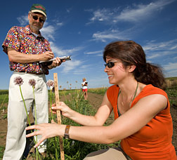 Geneticist (left) and graduate student take measurements of garlic: Click here for full photo caption.
