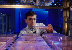 Photo: ARS physiologist Raymond P. Glahn examines cell cultures that help identify ways to increase iron's bioavailability. Link to photo information