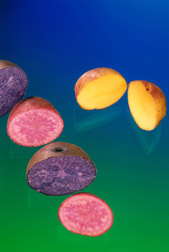 Colored potatoes with antioxidants galore: Click here for photo caption.