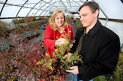 ARS geneticist and plant pathologist inspect blueberry plants used in studies to identify genetic markers for cold-hardiness and chilling requirement: Click here for full photo caption.