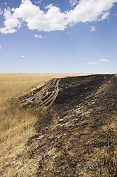 Contrast between burned and unburned shortgrass steppe after a fall wildfire in northeastern Colorado: Click here for photo caption.
