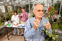 In the background, geneticist Ann Callahan measures sugar content of plum fruit as plant molecular biologist/pathologist Chris Dardick measures fruit size. In the foreground, horticulturist Ralph Scorza pollinates plum flowers: Click here for full photo caption.