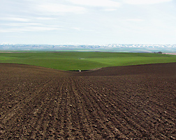 A traditionally farmed field at a research watershed in Pendleton, Oregon, with no residue, 7 months before it was seeded: Click here for photo caption.