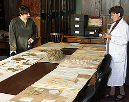 Tamara Smekalova (right), head of the Agrobotany Department, shows Stephanie Greene, ARS plant geneticist, herbarium specimens at the N.I. Vavilov Institute of Plant Industry in St. Petersburg, Russia: Click here for full photo caption.