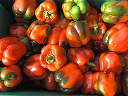 Bell peppers: Click here for full photo caption.