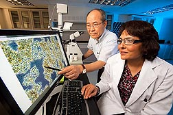Chemist Sanghoon Kim (left) and food technologist Mukti Singh review a microscope image showing the effects of oat beta-glucan during yogurt fermentation: Click here for full photo caption.
