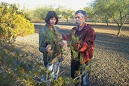In Maricopa, Arizona, ARS plant physiologist Mike Salvucci and professor Rebekka Wachter from Arizona State University discuss strategies for isolating the enzyme rubisco activase from creosote bush, a heat-tolerant desert shrub: Click here for photo caption.