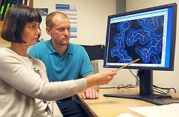 Research associate Nathan Henderson (right) and Arizona State University professor Rebekka Wachter, both structural biochemists, examine a three-dimensional view (via X-ray crystallography) of rubisco activase from creosote bush: Click here for photo caption.
