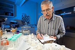 ARS entomologist John Carroll conducts tests to show the effects a 1-hour exposure to citrus rind chemicals has on ticks: Click here for photo caption.
