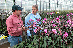 This greenhouse full of orchids is heated by a biomass boiler system. Here, ARS technician Denny Bookhamer (left) and president of Plainview Growers Arie Van Vugt discuss the use of biomass instead of fuel oil and the potential carbon footprint from each: Click here for photo caption.