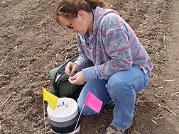ARS technician Joy Barsotti collects greenhouse gas samples from a static chamber at an experimental site in eastern Montana: Click here for full photo caption.