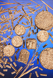 Switchgrass can be formed into pellets, cubes, and round briquettes that can be used to heat homes and businesses instead of fuel oil: Click here for photo caption.