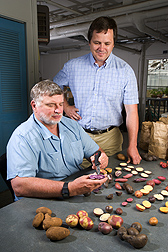 Geneticists Chuck Brown (left) and Roy Navarre examine diverse potato lines: Click here for full photo caption.