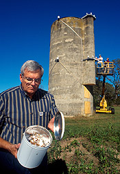 Tedders examines lady beetles collected from silo: Link to photo information
