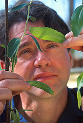Biologist Craig Cavin examines safflower leaves. Link to photo information.