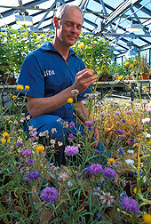 Plant pathologist examines a yellow starthistle weed for rust symptoms. Link to photo information.